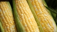 Produce Market Review - Organic Bi-Color Corn & Organic Greens