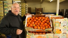 Assorted Parsley & Peruvian Murcotts | Market Review