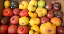 The Market Review - Heirloom Tomatoes & Hawaiian Pineapple
