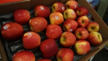 The Market Review - Comice Pears & Autumn Glory Apples
