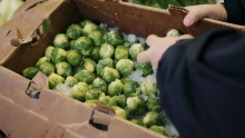 The Market Review - Mayan Sweet Onions & Brussels Sprouts