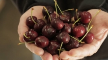 The Market Review - Romano Beans and New Zealand Cherries