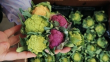 The Market Review - Baby Cauliflower & Murcott Mandarins