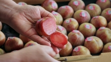 The Market Review - Dino Pluots & Washington Cherries