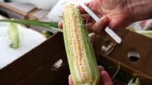 The Market Review - Uesugi Farms Corn