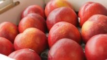 The Market Review - Sweet2Eat Nectarines & Manila Mangoes