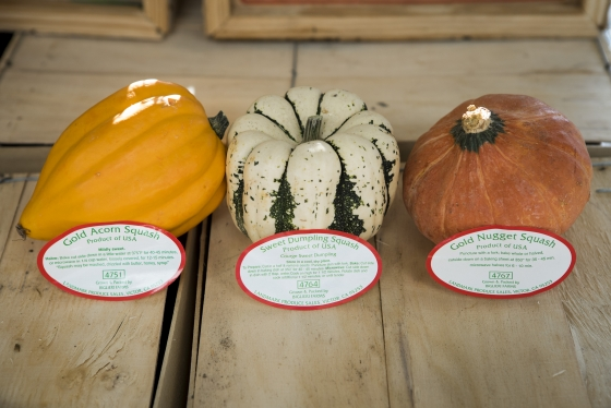 Fall Squash Varieties