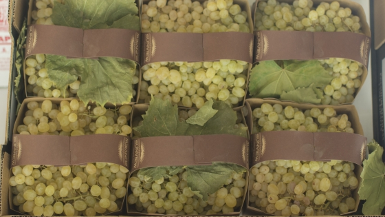 Thomson Seedless Grapes