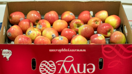 Envy, Apples, fruit, shasta, produce, farming, agriculture, horticulture, healthy, organic, lifestyle, food, wholesale, mercy