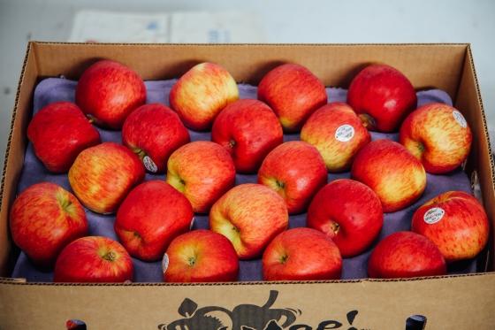 Case of Smitten Apples