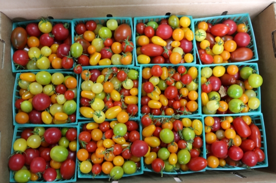 Cherry Tomatoes Mixed Medley