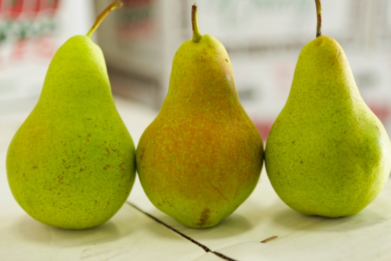 Concrode Green Pears