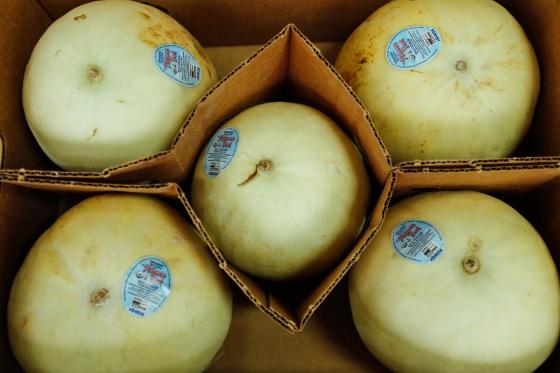 Honeydew Melons