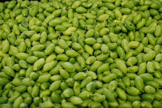 how to eat green garbanzo beans