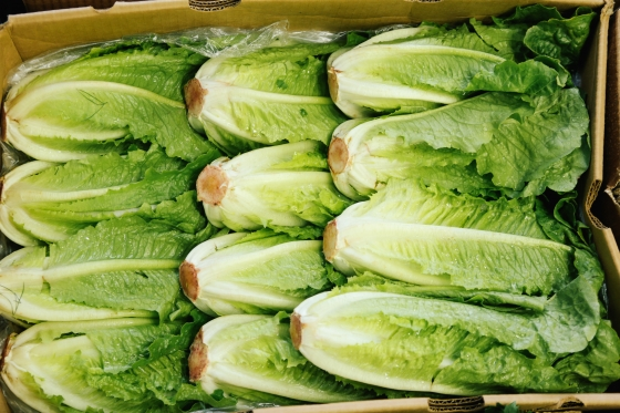 Case of Romaine Lettuce