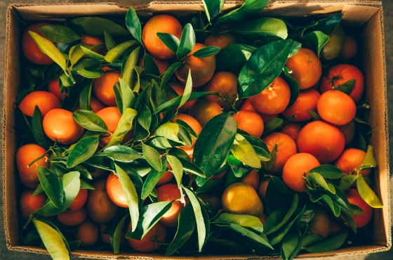 Beautiful Stem and Leaf Murcott Mandarins