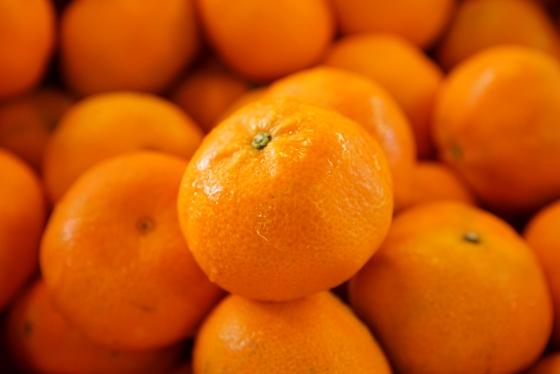 Mandarin Orange Hybrid