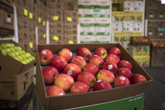 Pink Lady Organic Apples
