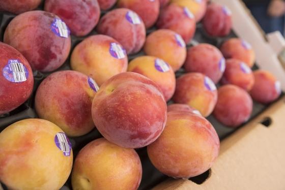 Apricots - Ruby Velvets