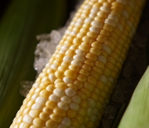 Sweet Corn On The Cob