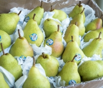 Bartlett Pears Grown in America
