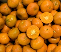 farming, agriculture, citrus, honey, lifestyle, sweet, tasty, delicious, healthy, produce, Shasta, horticulture, wholesale, tangerine
