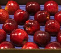 fancy, jonathan, apple, shasta, produce, fruit, fall, season, shiny, pretty, beautiful, healthy, small, san francisco, California, nature, diet