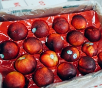 Larry Ann Plums
