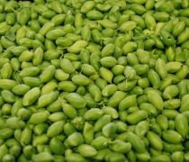 Green Garbanzo Beans