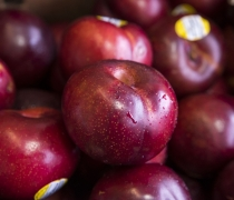 Stone Fruit Organic Plums