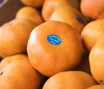 Clementines Grown in Peru