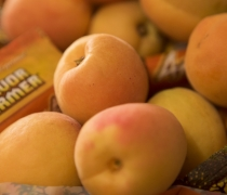 California Gold Apricots
