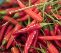 Thai Red Chile Peppers