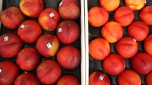 Summer Solstice Fruit! Nectarines & Tomcots