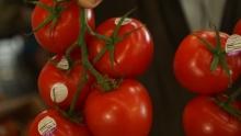 The Market Review - Elegant Lady Peaches & Village Farm Tomatoes