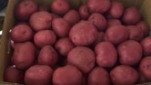 Assorted Potatoes & Organic Washington Fuji Apples | Market Review
