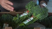 Organic Baby Broccoli & Washington State Apples | Shasta Produce Market Review