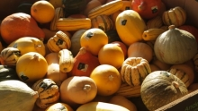The Market Review - Assorted Squash & Organic Green Beans