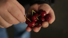 The Market Review - Red Cherries & Pinata Apples