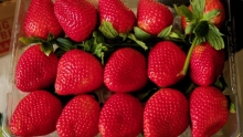 The Market Review - Long-Stem Strawberries & Muscat Grapes