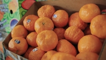 The Market Review - Champagne Mangoes & Gold Nugget Mandarins