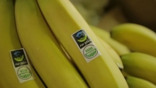The Market Review - Peruvian Bananas & Red Plums