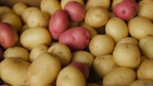 The Market Review - Bell Peppers and New Potatoes