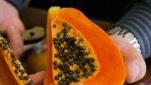 The Market Review - Maradol Papaya & Persian Cucumbers