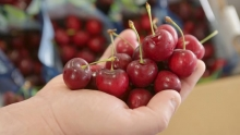The Market Review - Bing Cherries & Prima Peaches