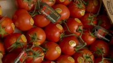 The Market Review - Del Cabo Tomatoes & New Crop California Potatoes