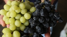 The Market Review - California Grapes