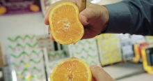The Market Review - Valencia Orange & Super Mango