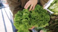 The Market Review - Coachella Valley Lettuce