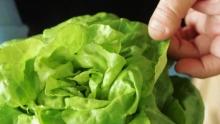 The Market Review - Barhi Dates & Aquaponic Living Butter Lettuce